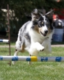 Sherwood Barks Dog Training & Agility